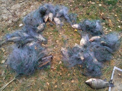 Протягом місяця вилучено майже тонну риби зі збитками на 85 тис. грн, - рибоохоронний патруль Київщини