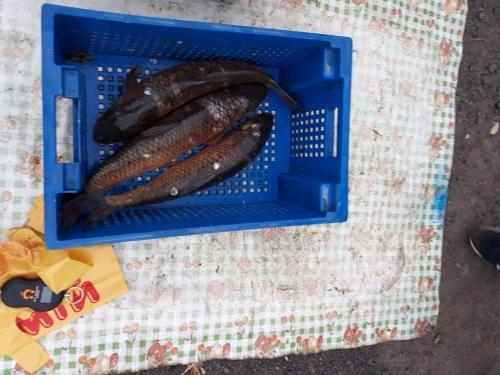 На столичних ринках вилучено 133 кг незаконної риби, - Київський рибоохоронний патруль