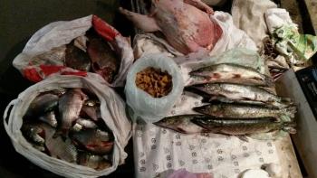 В період з 29.12.2016 по 06.01.2017 рибоохоронним патрулем Київщини було виявлено 17 порушень