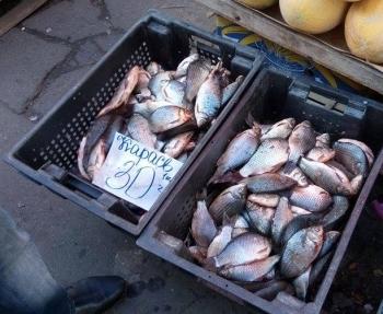Рибоохоронний патруль виявив порушення при збуті риби на 5 ринках Київщини