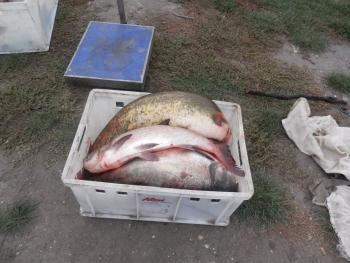 Київський рибний патруль затримав порушників правил промислового рибальства поблизу села Трушки