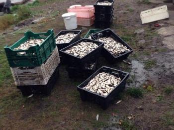 Рибний патруль Київщини виявив порушника поблизу Яготина, що незаконно виловив 371 кг риби та порушника на ринку Києва