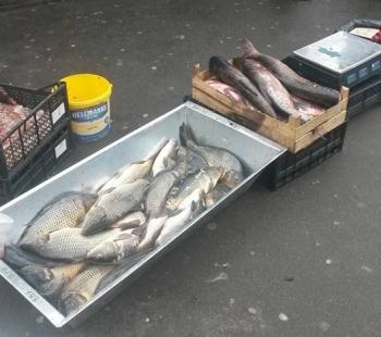 11-12 жовтня Київський рибоохоронний патруль зафіксував 4 порушення правил збуту водних біоресурсів та затримав 2 порушника з сітками