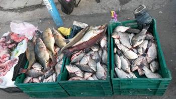 В період з 18 по 20 жовтня рибоохоронний патруль Київщини зафіксував 2 порушення правил збуту риби та затримав 4 порушника правил рибальства