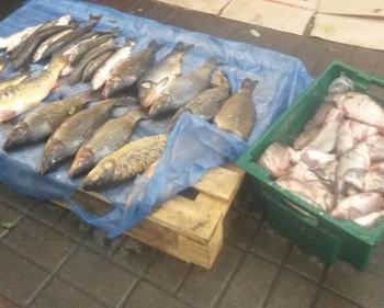 З 26 по 29 жовтня рибоохоронний патруль виявив 8 порушень на ринках Київщини