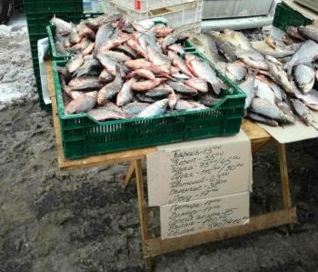 Проводячи перевірку в місцях збуту водних біоресурсів, Київським рибоохоронним патрулем було зафіксовано 4 правопорушення