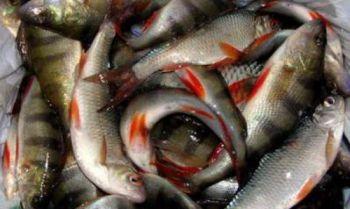 Київський рибоохоронний патруль перевірятиме звітність про вилов риболовів-промисловиків