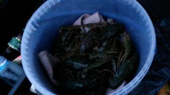 Виявлені правопорушення Київським рибоохоронним патрулем: незаконна торгівля раками та перевищення добової норми вилову
