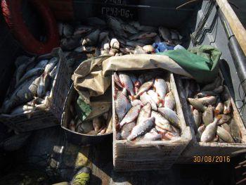 Київський рибоохоронний патруль затримав браконьєра, що сітками виловив 235 кг риби