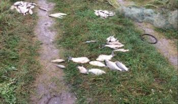 Браконьєр завдав збитків на майже 10 тис. грн, - рибоохоронний патруль Київщини