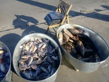Київський рибоохоронний патруль виявив 146 кг незаконної риби на ринку в Києві
