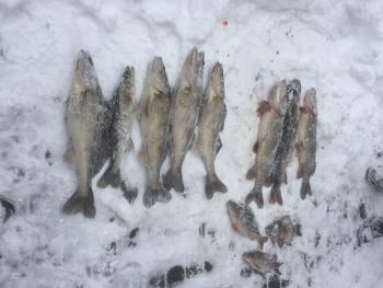 Протягом одного дня Київський рибоохоронний патруль вилучив у порушників 80 кг риби