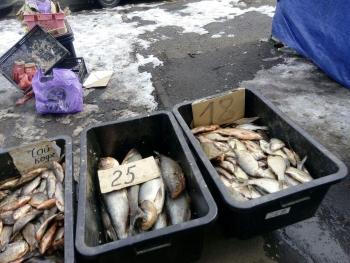 Київський рибоохоронний патруль зупинив незаконний продаж 76 кг риби та виявив 6 порушень на водоймах