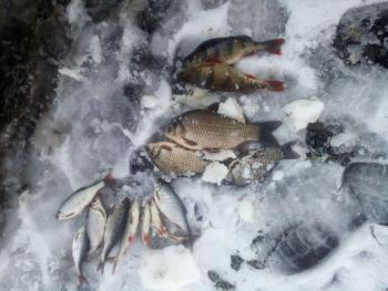 За три дні роботи Київський рибоохоронний патруль зафіксував 64 порушення