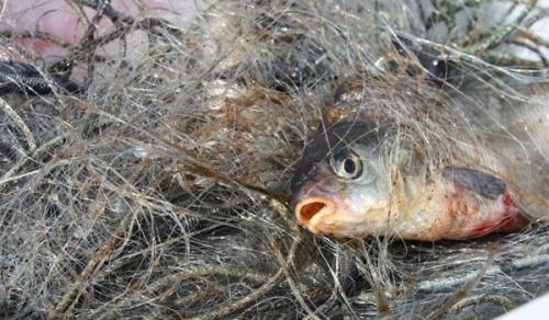 За два тижні викрито 38 порушень зі збитками на 77 тис. грн, - Київський рибоохоронний патруль