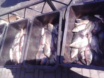 Київський рибоохоронний патруль вилучив 80 кг незаконної риби на ринках