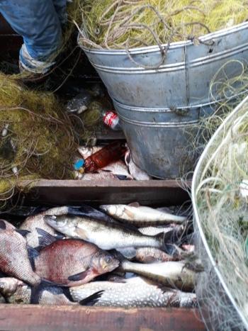 Суд зобов'язав промисловика сплатити 27,5 тис. грн за порушення, - Київський рибоохоронний патруль