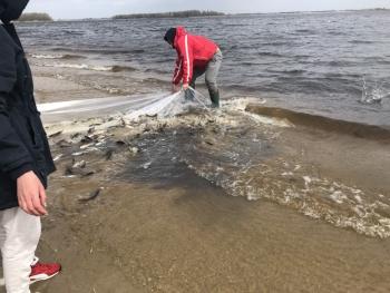 У Канівське водосховище випустили майже 12 тис. екз товстолоба, – Київський рибоохоронний патруль