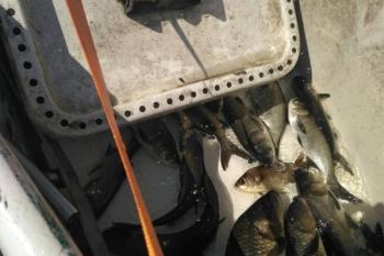 Цими вихідними зариблено столичні озера Райдужне та Редькине, - Київський рибоохоронний патруль