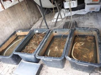 На ринках Київщини вилучено 63 кг водних біоресурсів