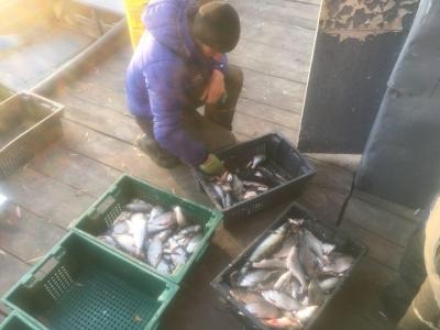 На зимувальній ямі затримано промисловика, який завдав збитків у розмірі 130 тис. грн, - Київський рибоохоронний патруль