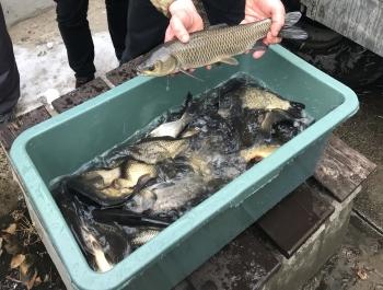У річку Дніпро вселено 2,2 тонни риби, - Київський рибоохоронний патруль
