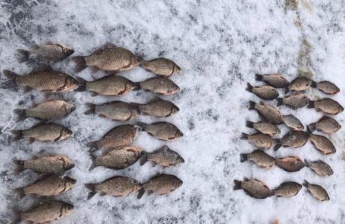 За чотири дні рибпатрульні Київщини виявили 41 порушення та вилучили 112 кг риби