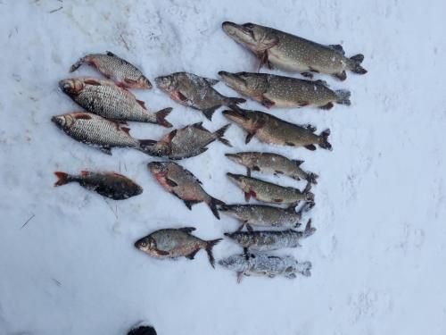На річці Тетерів затримано користувача, який завдав понад 21 тис. грн збитків, - Київський рибоохоронний патруль