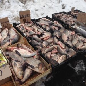 Протягом січня виявлено 155 порушень зі збитками на понад 63 тис. грн, - Київський рибоохоронний патруль