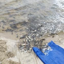 До водойм Київщини випустили понад 7 тонн риби, - Київський рибоохоронний патруль
