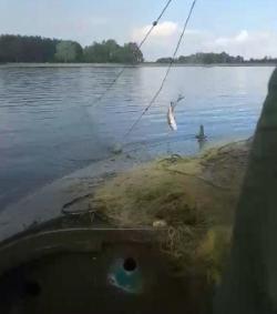 Більше півкілометра сіток було вилучено з водойм Макарівщини, - Київський рибоохоронний патруль