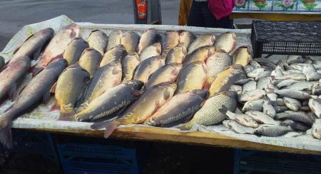 На столичному ринку вилучено 200 кг незаконної риби, - Київський рибоохоронний патруль